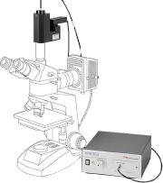 F40 汎用顕微鏡モデル